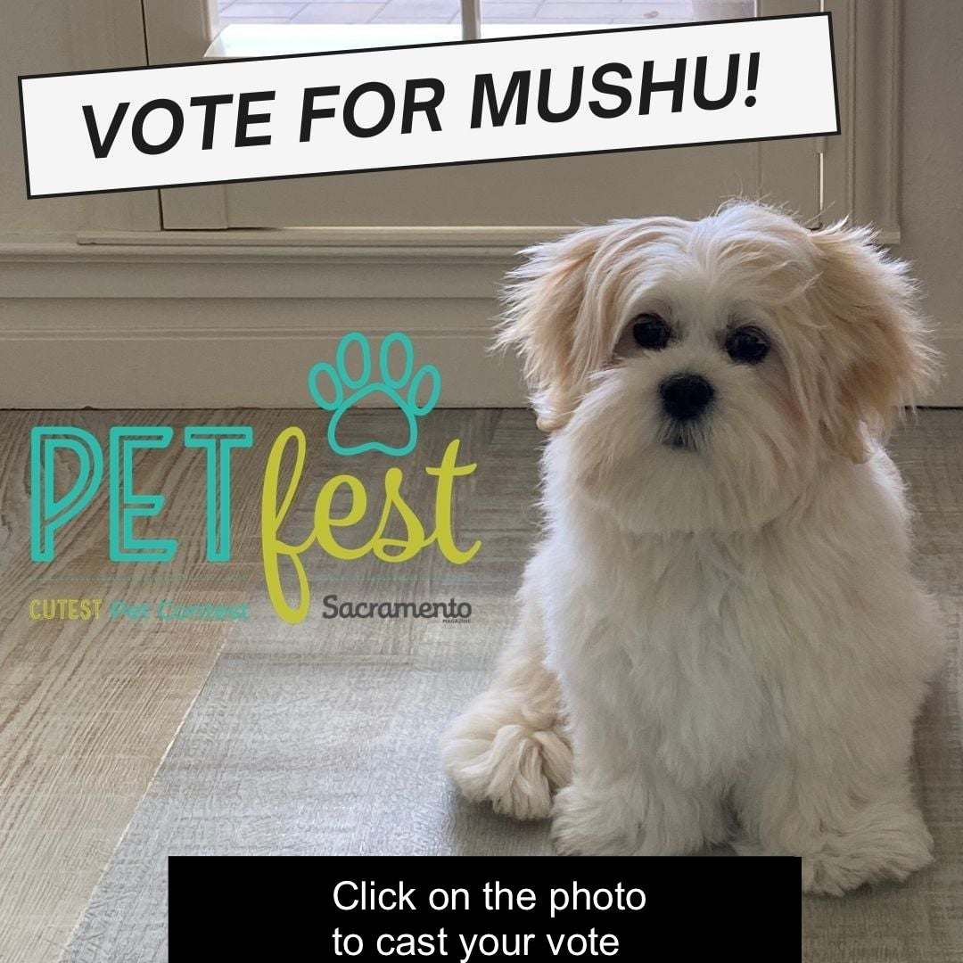 """Click on the photo to vote for MuShu in Sac Mag's """"Petfest"""""""